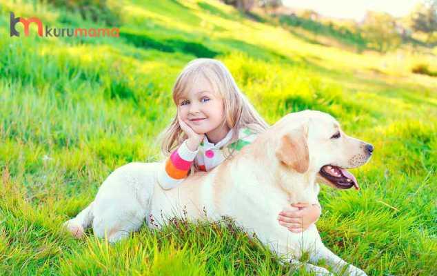 labrador retriever köpek özellikleri