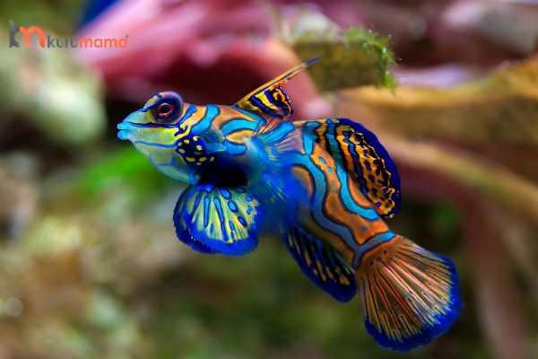 akvaryum balığı nasıl beslenir