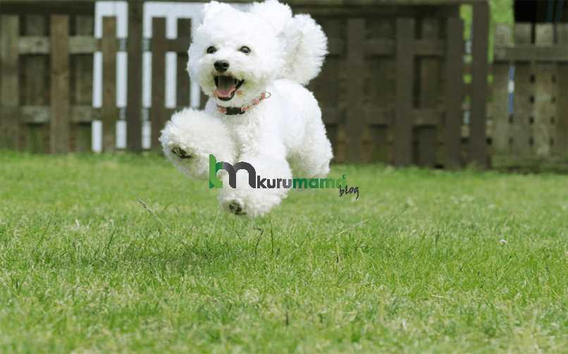 Kaniş cinsi köpek özellikleri