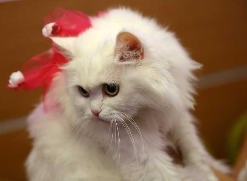 Kedi bakımı hakkında bilinmesi gerekenler