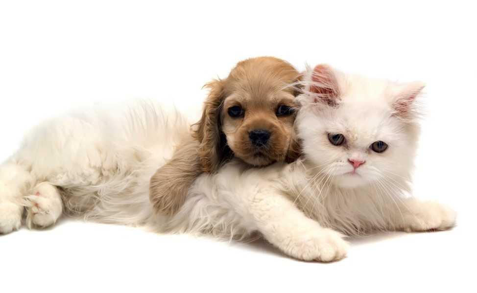 """""""Kedi İnsanı"""" mısınız Yoksa """"Köpek İnsanı"""" mısınız?"""