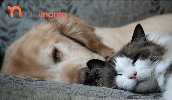 kedi köpek beslemek