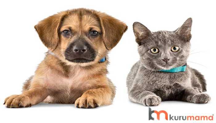 kedi köpek tercihi