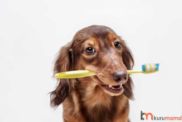 kedilerde ve köpeklerde diş sağlığı
