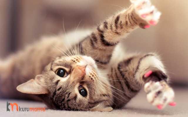 kedilerde sevgi ifadeleri