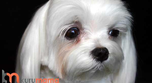 köpek kokusu neden olur