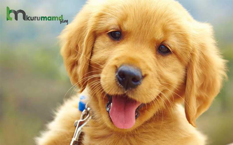 Köpekler Duyguları Hissedebilir mi?