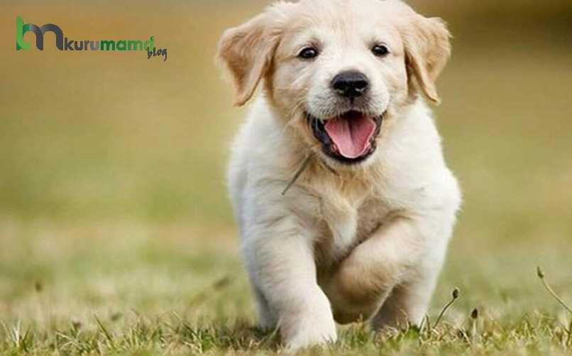 Köpekler Duyguları anlayabilir mi?