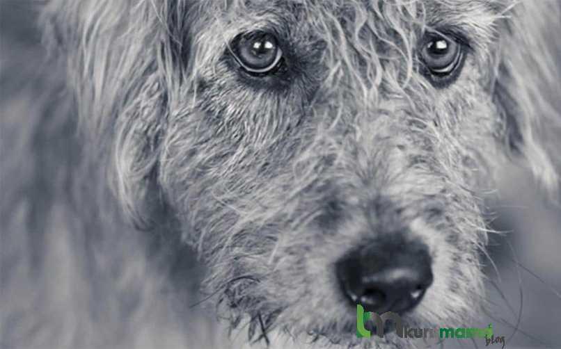 Köpekler Üzgün Olduğumuzu Sesimizden Anlayabilirler mi?