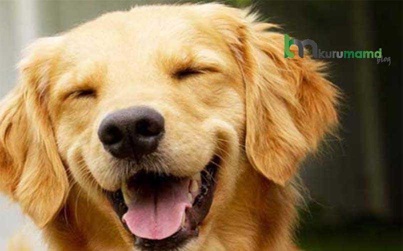 Köpeklerde koku yapan hastalık