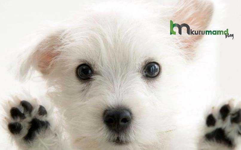 Köpeklerde koku yapan hastalıklar