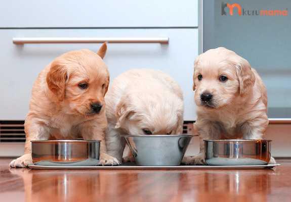 yavru köpek beslenmesi