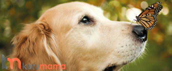 köpekler nasıl sakinleştirilir