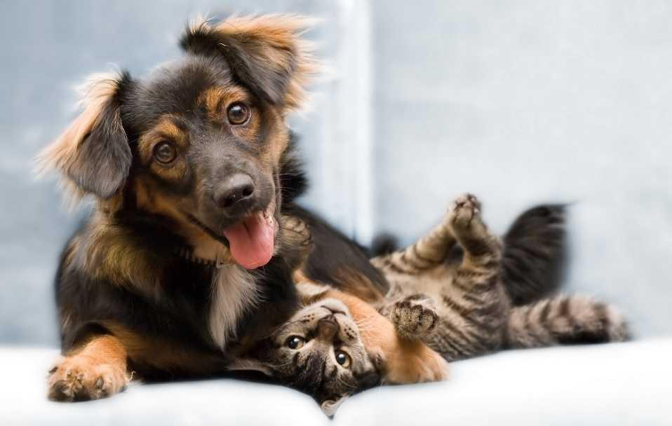 Evcil Hayvan Besleyenler İçin Ev Temizlik Önerileri