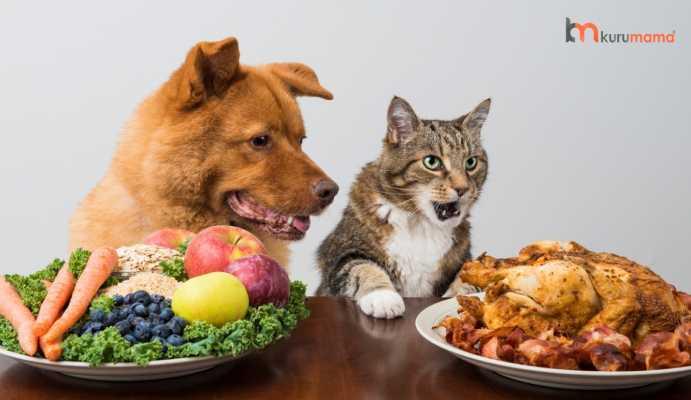 evcil hayvan ev yemeği