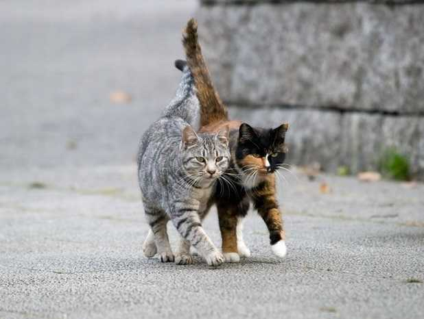 Kedi maması alırken dikkat edin