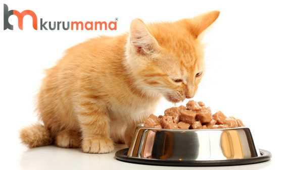 kedi maması nasıl seçilir