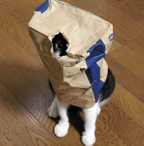 Kediler Her Yere Sığar