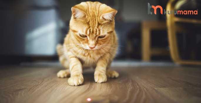 kediler için egzersiz