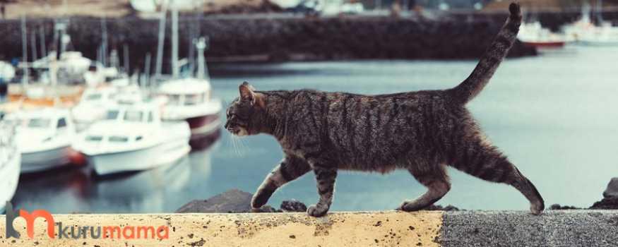 kediler suyu neden sevmez