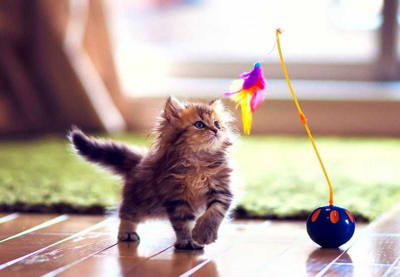 Kedinizin eğlenerek yapacağı 5 egzersiz