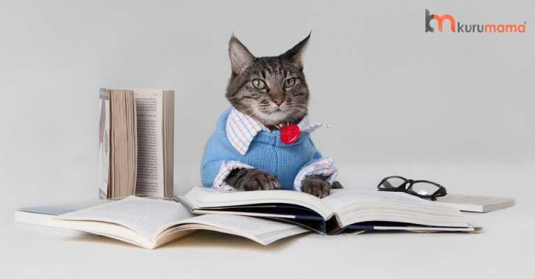 kedilerin zekası
