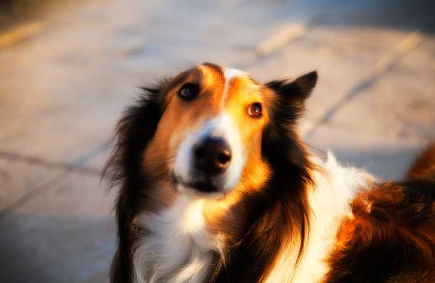 Köpeğiniz için her şey
