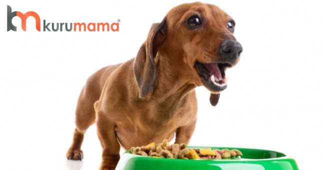 köpeklerde kuru mama seçimi