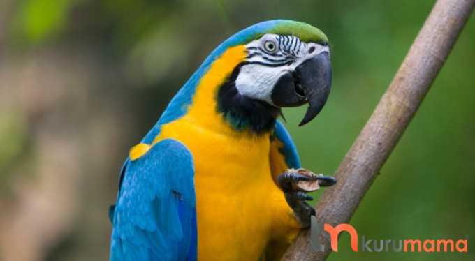 papağan bakımı ve özellikleri