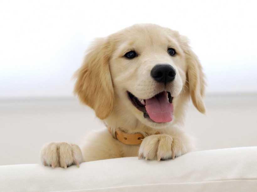 Köpek Sahiplerinin Değişik Huyları