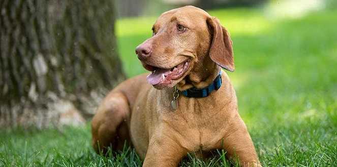 Köpeğiniz duygularınızı gerçekten anlayabiliyor mu?