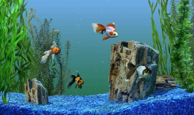 Kaliteli balık yemi nasıl olur?