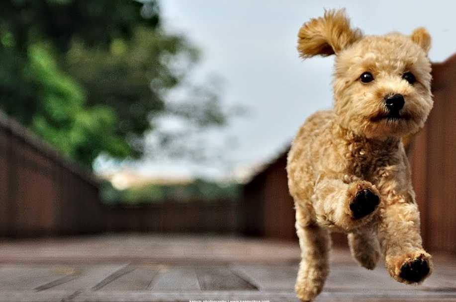 Hareketli Köpeklerin Can Sıkıntısına Çareler