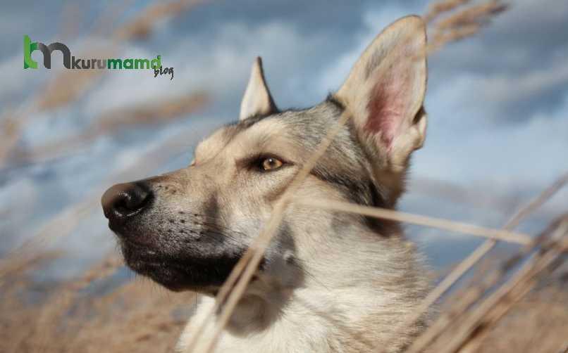 Köpek tüy bakımı