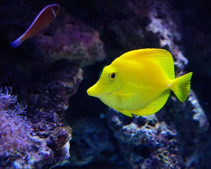 Balıklar İçin Püf Noktalar