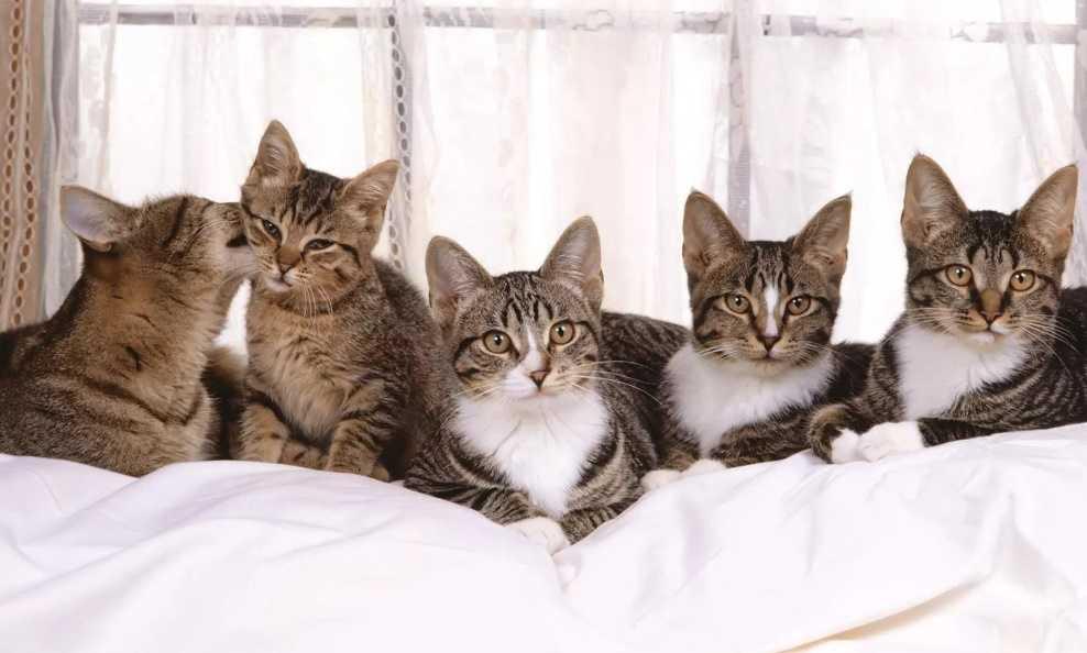 Kedi Kumu Alırken Nelere Dikkat Edilmelidir?