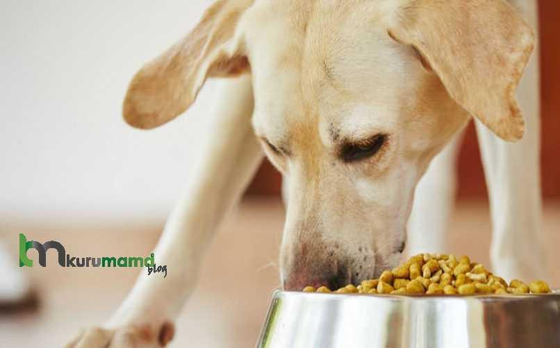 Köpek Maması Nasıl Seçilir?
