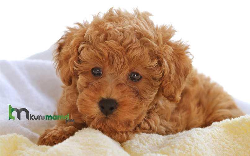 Köpeklerde Kuru Mama Tercihi Nasıl Olmalıdır?