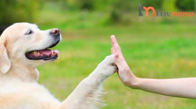 köpeklerde eğitim