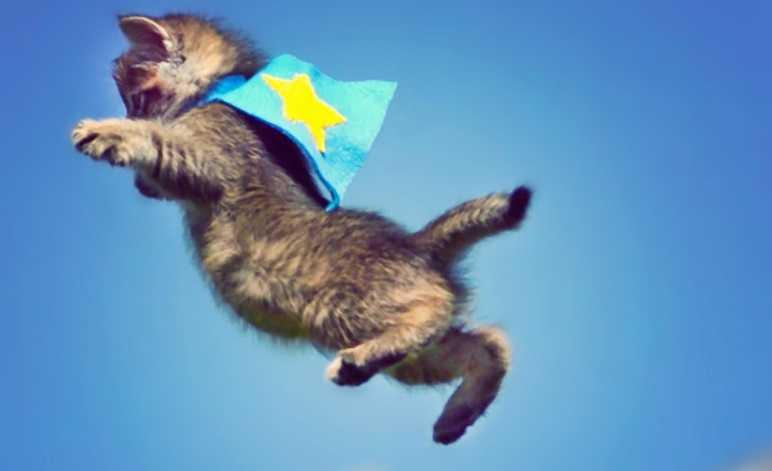 Kediler neden 4 ayaküstüne düşer?
