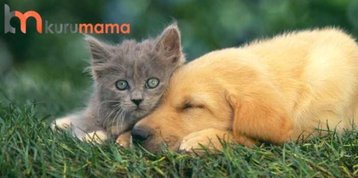 kediyle köpeği alıştırmak