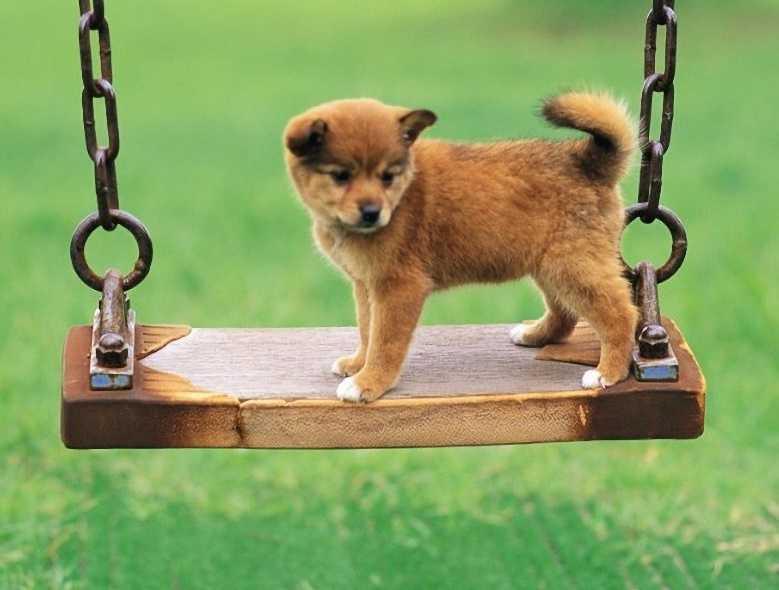 Köpeğinizle hoş vakit geçirmek için bilmeniz gerekenler