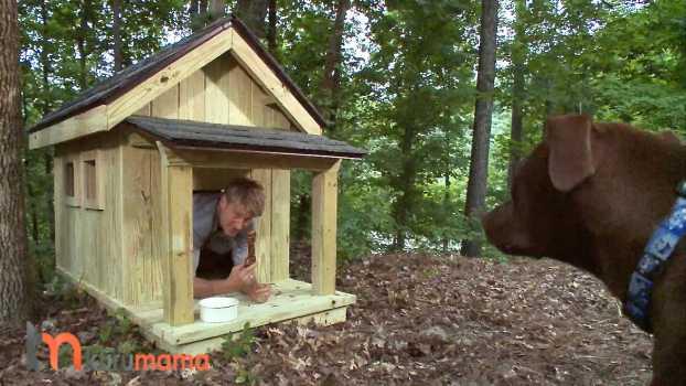 köpek kulübesi nasıl seçilir