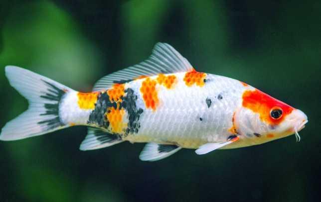 Balıklar ne yer?