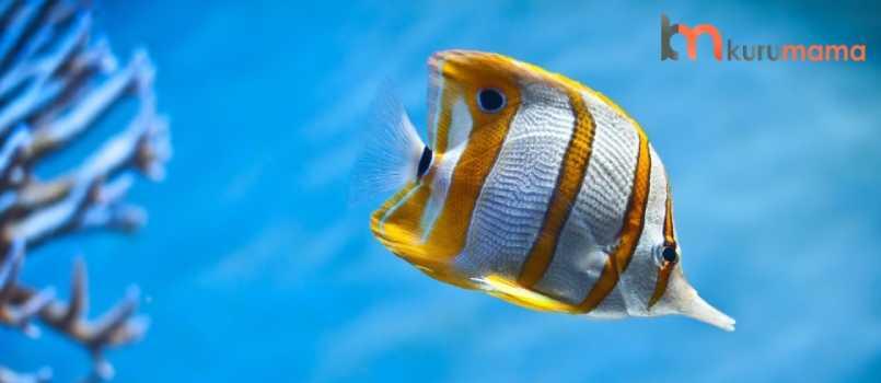 balıklar uyur mu