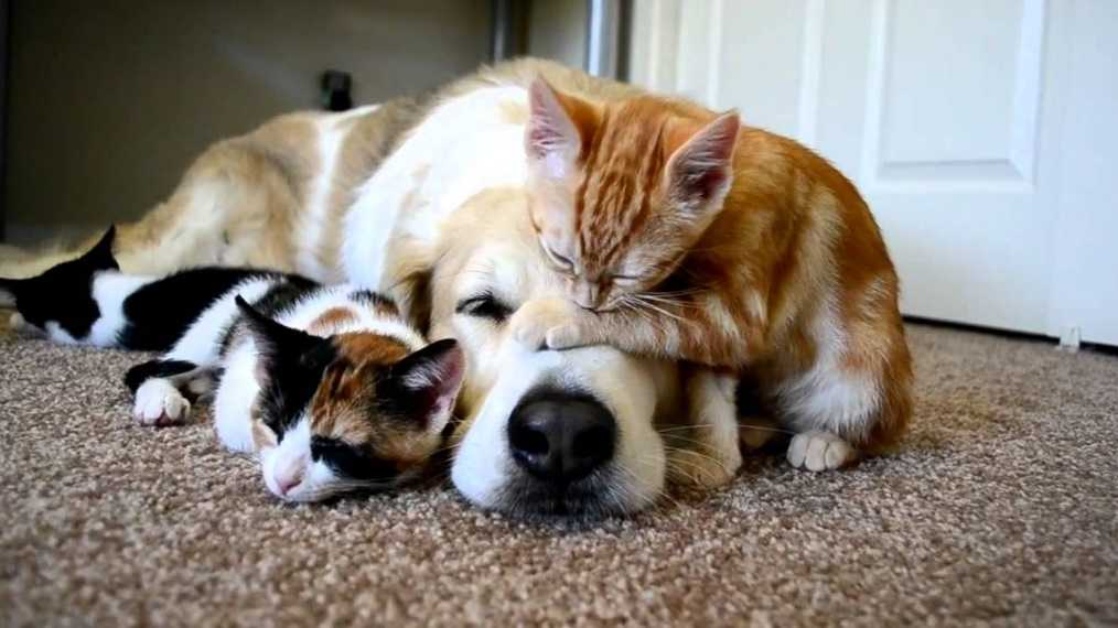 Evcil hayvan bakımı