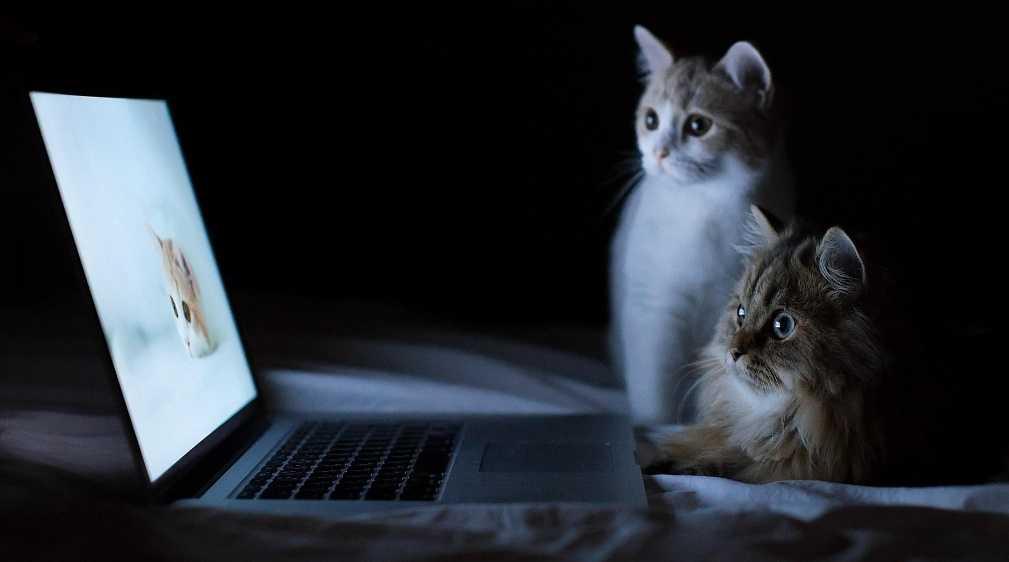 İki kedi beslemenin avantajları
