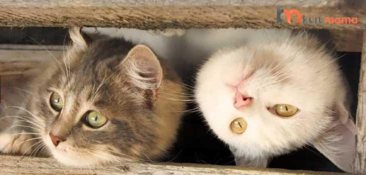 iki kedi beslemenin avantajları