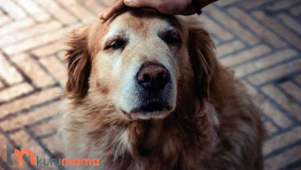 köpekler için aksesuar seçimi