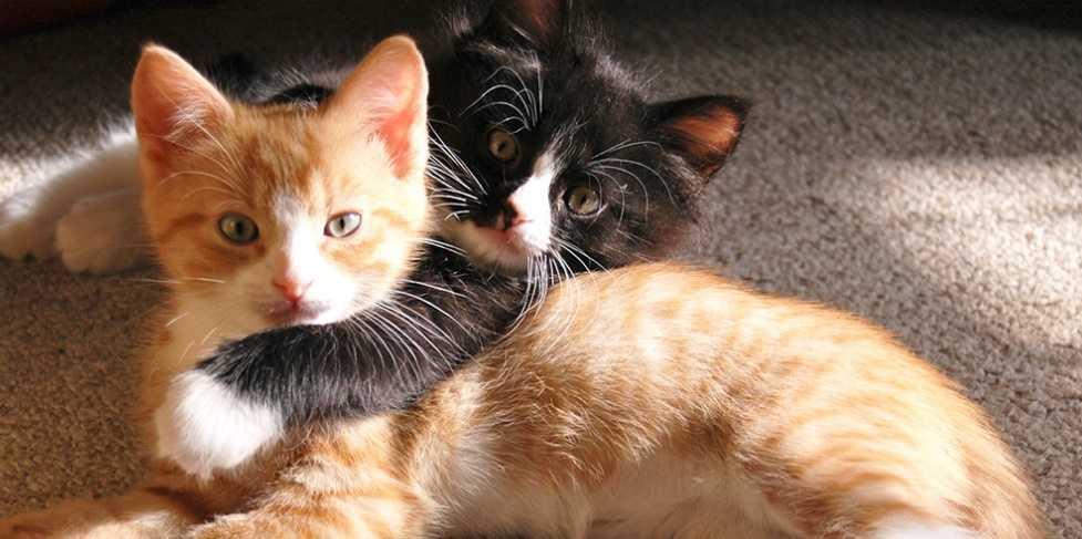 Kedi kısırlaştırma ile ilgili doğru bilinen yanlışlar